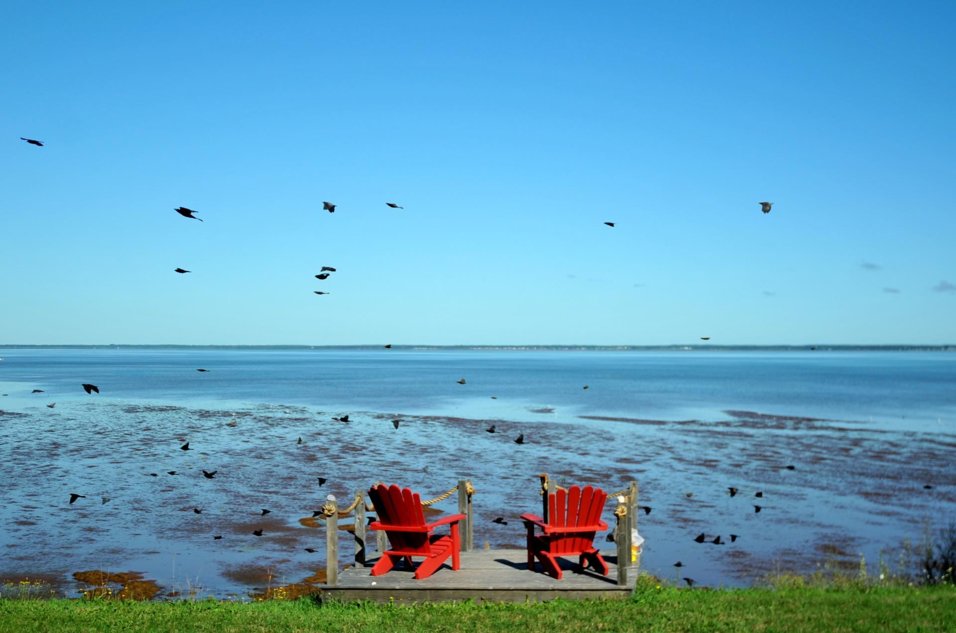Birds_redchairs